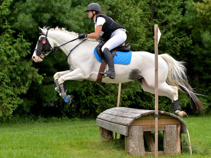 Horse jumping over obstacle with rider