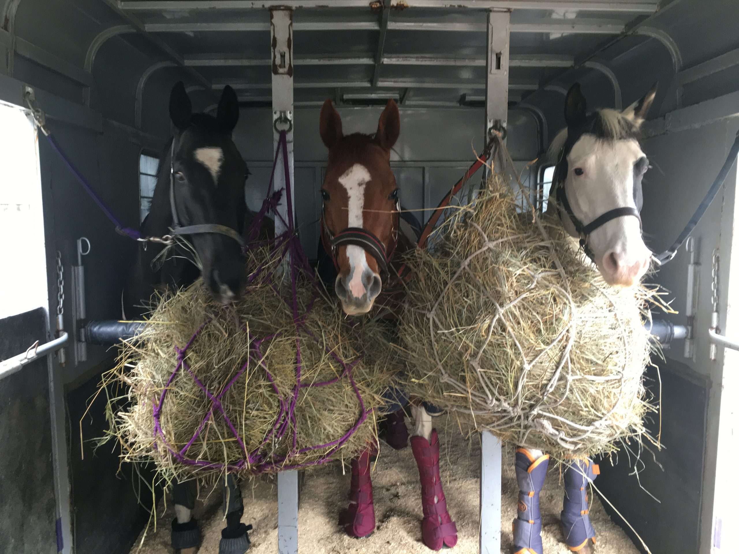 Horses in trailer with hay