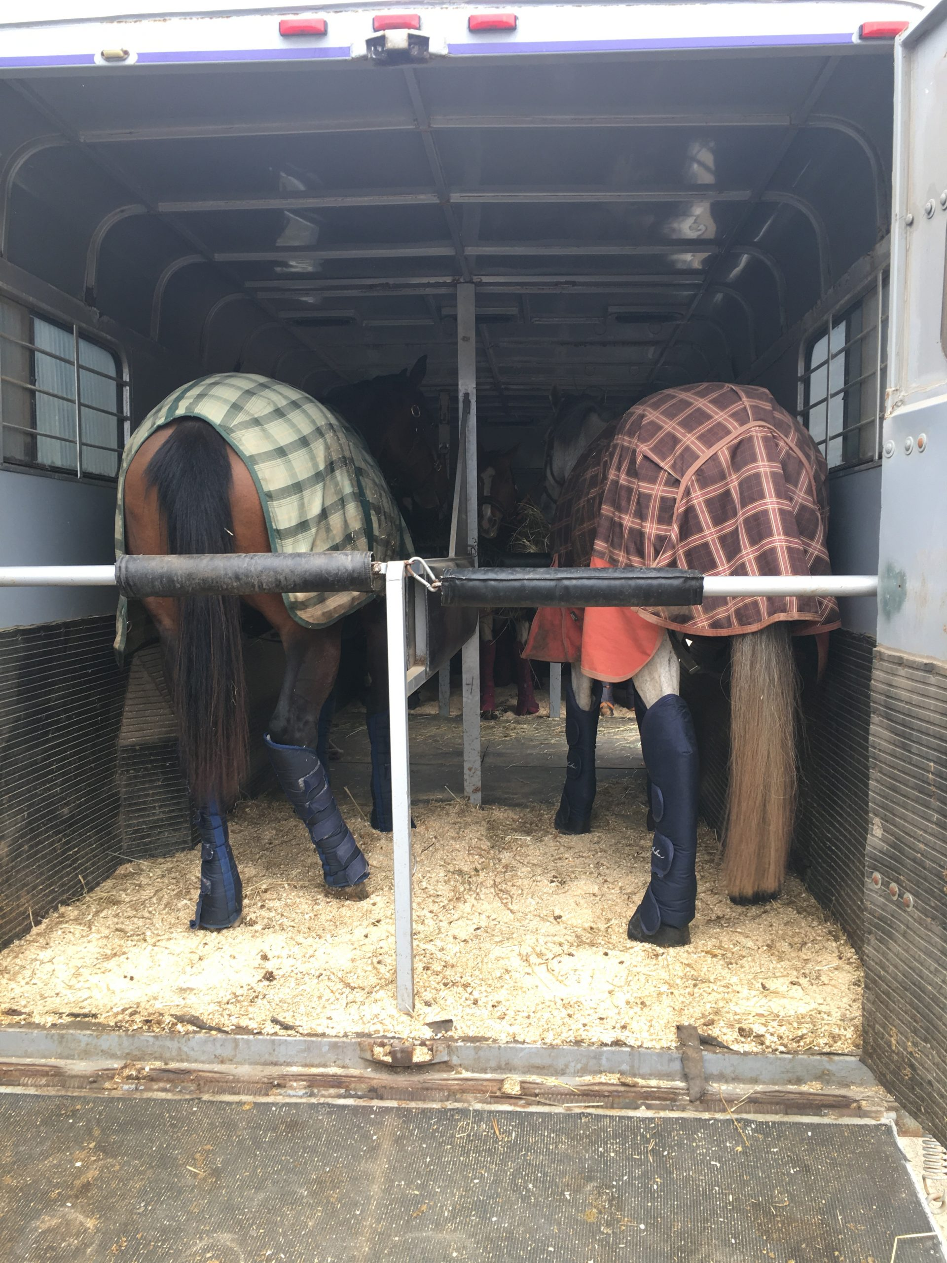 Horse covered in trailer