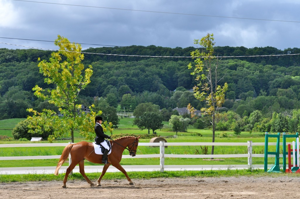 Person riding horse with wooded backdrop