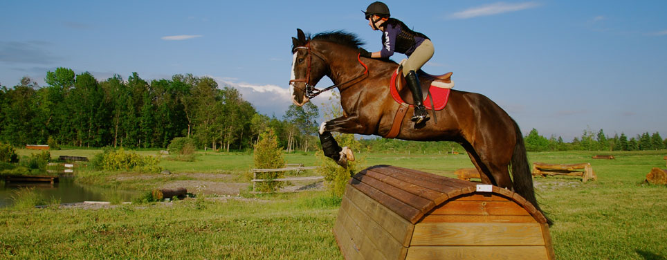 Horse and rider jumping over object