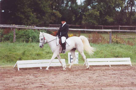 white horse and person