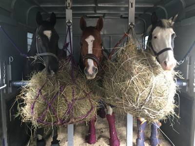 3 horses in trailer with hay